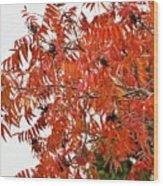 Leafs006 Wood Print
