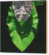 Leaf.three Layers Wood Print