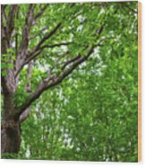 Leafy Canopy Wood Print