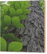 Leafy Ladder Wood Print