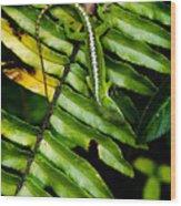 Leafy Lizard Wood Print
