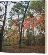 Leafy Pathway Wood Print