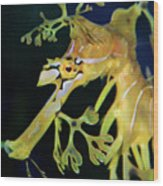 Leafy Sea Dragon Wood Print by Mariola Bitner