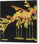Leafy Sea Dragon On Black Wood Print