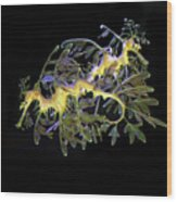Leafy Sea Dragons Wood Print