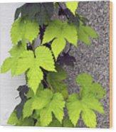 Leafy Vine Wood Print