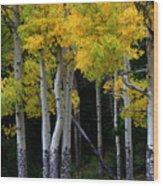 Leaning Aspen Wood Print