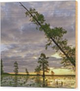 Leaning Cypress Wood Print