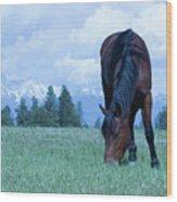 Leaning Horse Wood Print