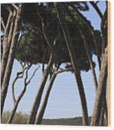 Leaning Pine Trees Wood Print