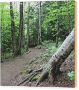 Leaning Tree Wood Print