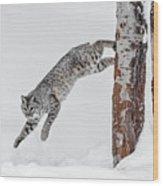 Leapin Bobcat Wood Print