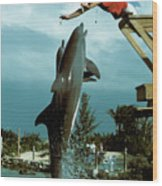 Leaping Dolphins At Hawks Cay Wood Print