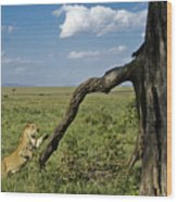 Leaping Lion Wood Print