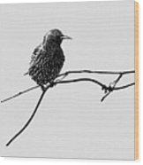 Learning To Fly Wood Print