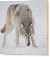 Leary Wolf Style Wood Print
