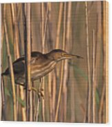 Least Bittern Wood Print