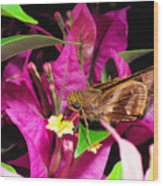 Least Skipper Butterfly Wood Print