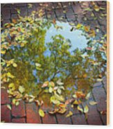 Leaves And A Puddle Wood Print