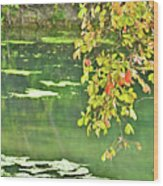 Leaves And Water Wood Print