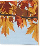 Leaves Autumn Orange Sunlit Fall Leaves Blue Sky Baslee Troutman Wood Print