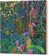 Leaves Changing Color As Autumn Approaches In Iguazu Falls National Park-argentina   Wood Print
