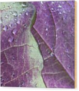 Leaves, Color,  And Dew Wood Print