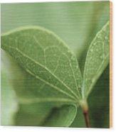 Leaves, Fresh Wood Print