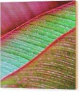 Leaves In Color  Wood Print
