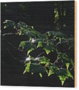 Leaves In Filtered Light  Wood Print