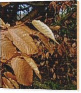 Leaves In Late Autumn Wood Print