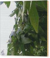 Leaves In Memorial Wood Print