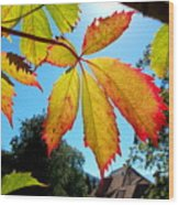 Leaves In Sunlight 4 Wood Print