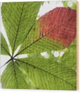 Leaves. Wood Print by Itai Minovitz