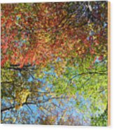 Leaves Of All Colors Wood Print