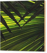 Leaves Of Palm Color Wood Print