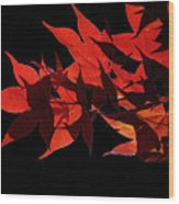 Leaves Of Red Wood Print