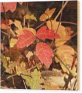 Leaves Of Three Wood Print