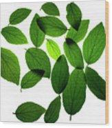 Leaves on White Wood Print