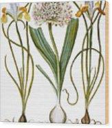 Leek And Irises, 1613 Wood Print