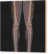 Leg Blood Supply Wood Print