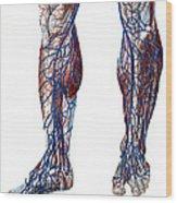 Leg Blood Vessels, Anatomical Wood Print