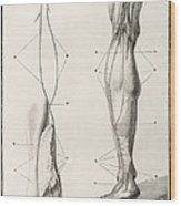 Leg Nerve, 18th Century Illustration Wood Print