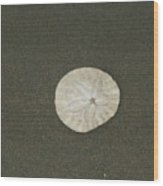 Legend Of The Sand Dollar Wood Print