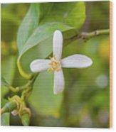 Lemon Blossoms 1 Wood Print