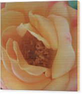 Lemon Blush Rose Wood Print