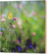 Lemon Butterfly In Summer Meadow  Wood Print