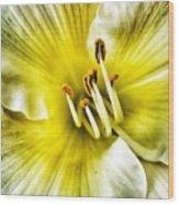 Lemon Cream Daylilly Wood Print