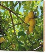 Lemon Tree Wood Print