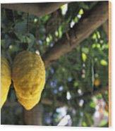 Lemons Hanging From A Lemon Tree Wood Print by Richard Nowitz